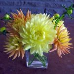 fall dahlias